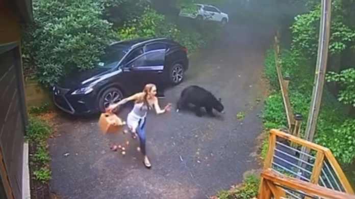 Kvinde får sit livs chok - der sad en bjørn på førersædet