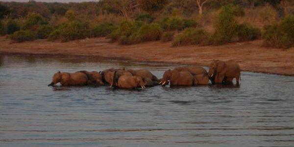 Chobe Park, Botswana – Day 248