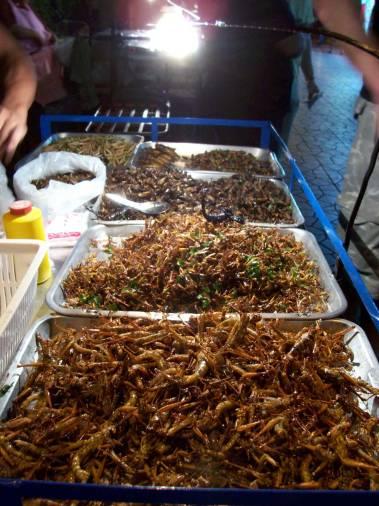 bangkok bugs