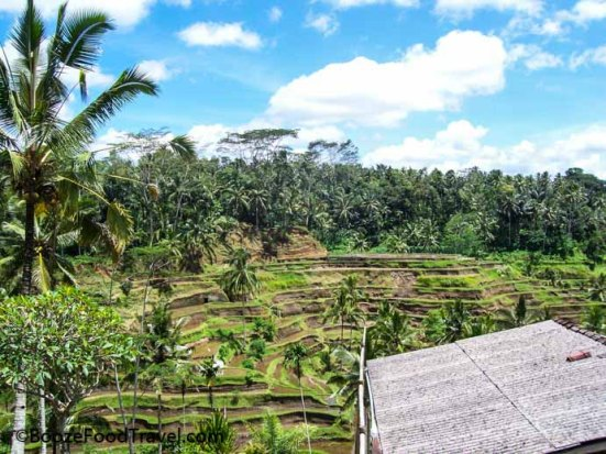 Bali terraced fields
