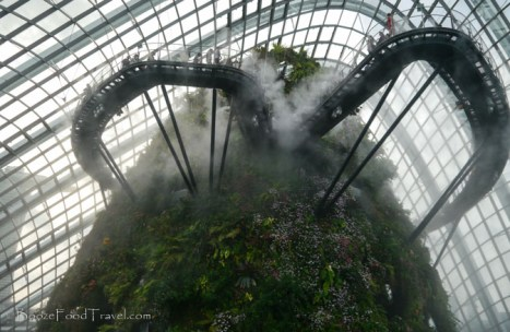 This is why it's called the Cloud Forest