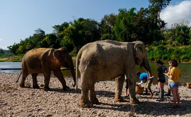 Manadalao elephants
