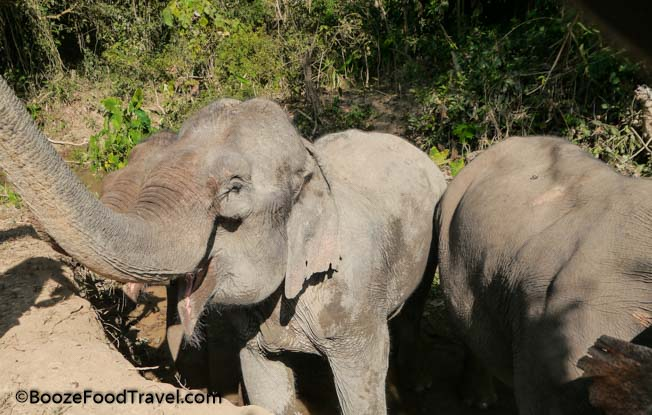 mandalao elephant sanctuary