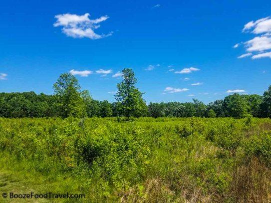 great swamp meadow
