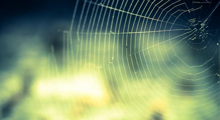 Ein Spinnennetz, das Backlinks symbolisiert