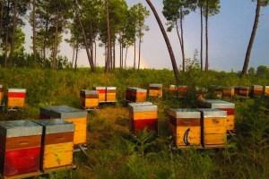 apiculture nature