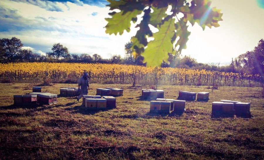 miels biologiques gironde