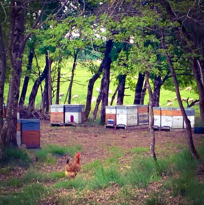 pour le bonheur des poules