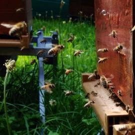apiculture bio