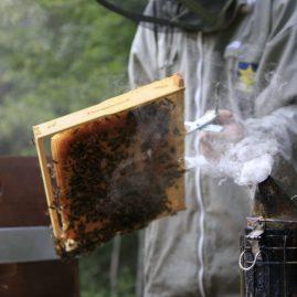 apiculture biologique