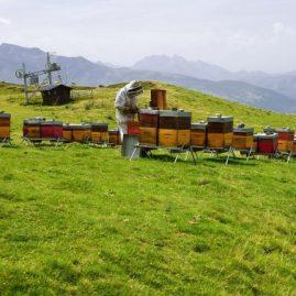 miel bio de montagne
