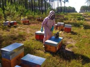 peoducteurs miels bio