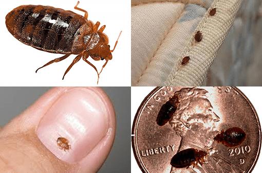 São tão pequenos que se tornam quase imperceptíveis a olho nu
