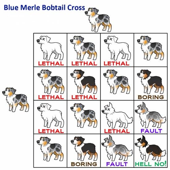 99+ Australian Shepherd Chart