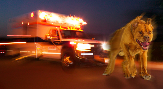 dog_flees_from_ambulance