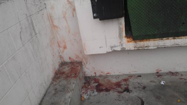 The dog was assaulted and bled severely in this corner before retreating to the other corner to die