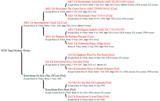 Tang Dynasty Rocky pedigree, CHs in red
