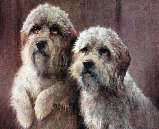 Their faces might be cute, but Dandie Dinmonts have murder in their hearts.