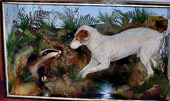 Antique Terrier and European Badger taxidermy by Hutchison of Derby