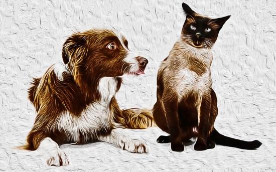 border_collie_points_cat
