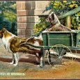 FromAnecdotes of Dogsby Edward Jesse, Esq., 1858 The Colley Or Shepherd's Dog: a sheep-dog whelps while working The following is, perhaps, a still more extraordinary anecdote of the fidelity shown […]