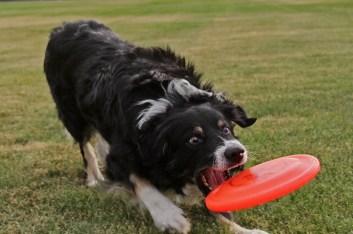 Crappy throw, expert catch.