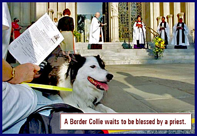 border_collie_blessed