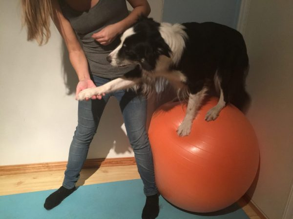 strength training dogs