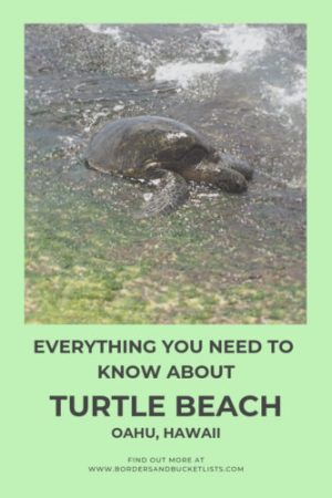 Everything to Know About Turtle Beach, Oahu, Hawaii #turtles #turtlebeach #laniakeabeach #oahu #hawaii