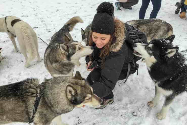 Meeting huskies in Tirol, Austria. Winter in Austria.
