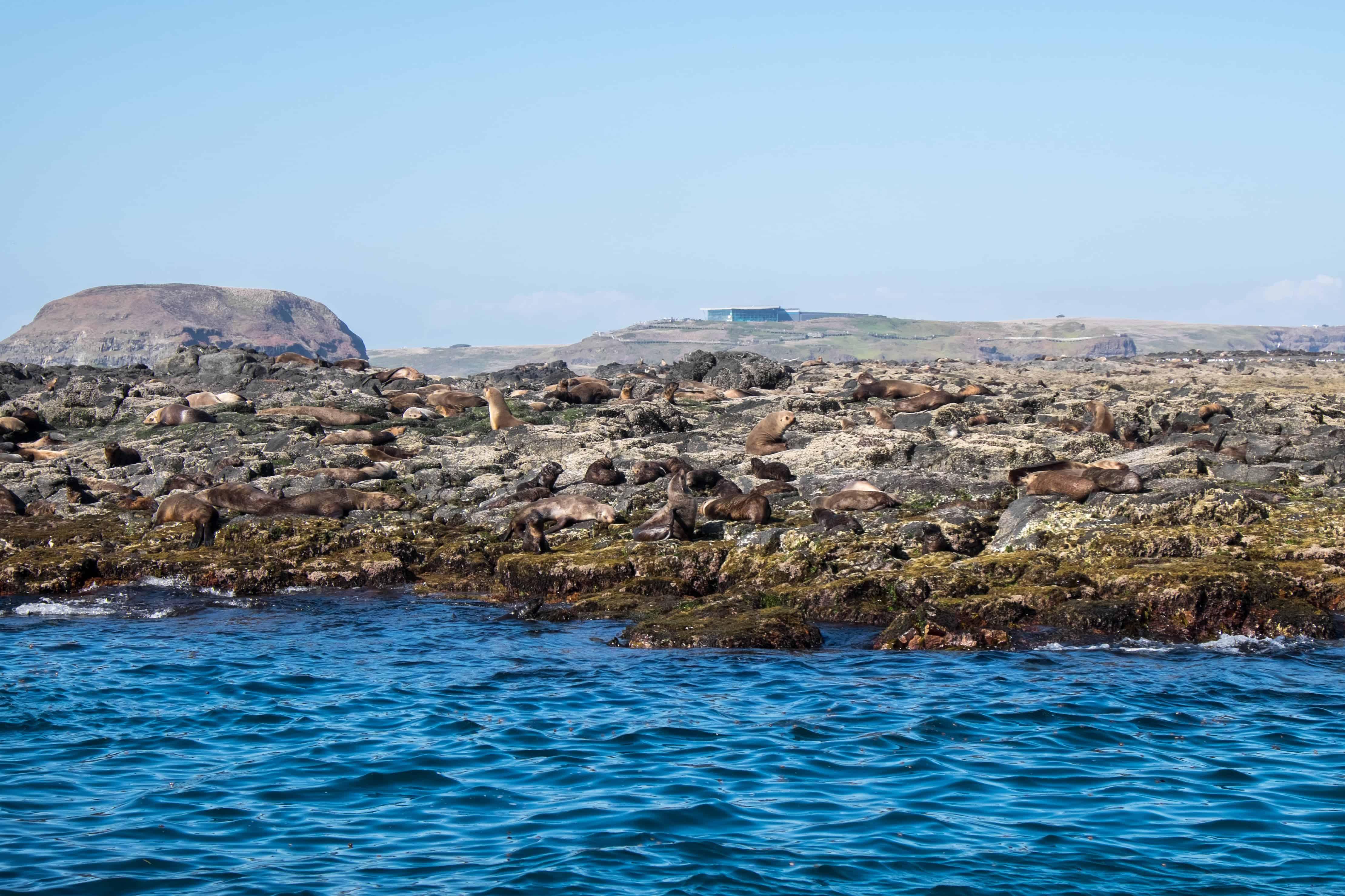Seal Rock, Phillip Island, Victoria, Australia Road Trip