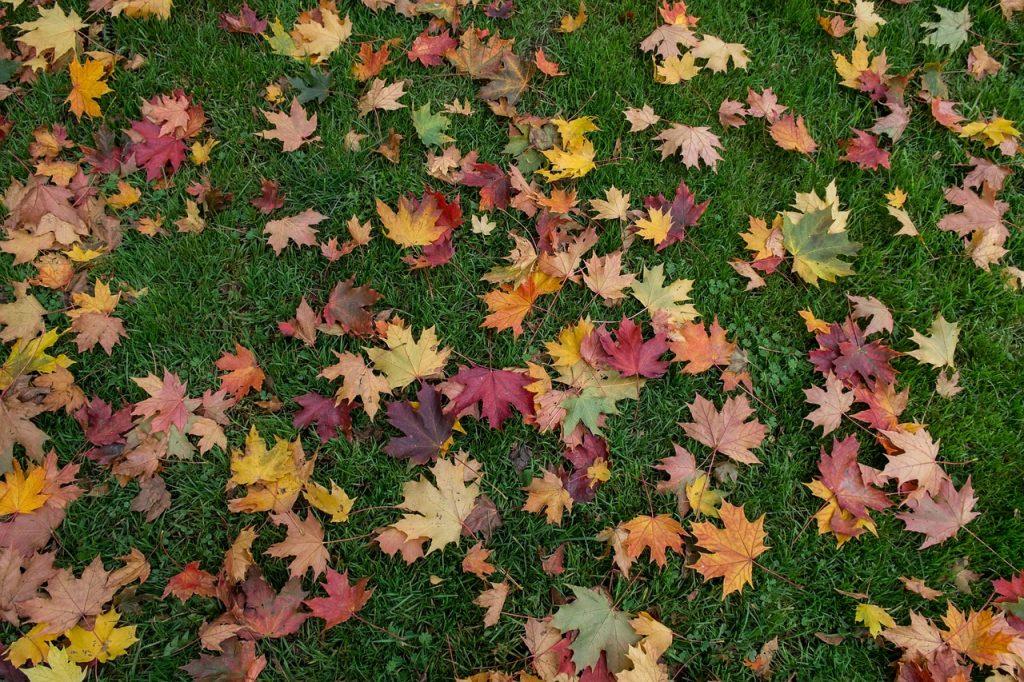 leaves-1004847_1280