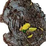 Resiliencia: figuraciones del horror