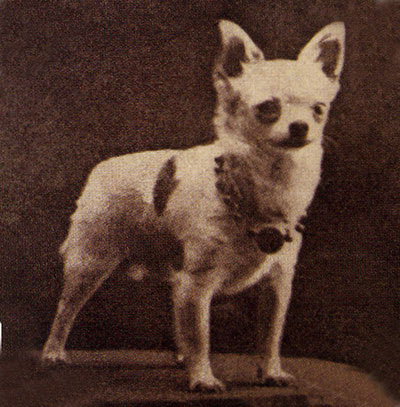 Chihuahua old photo