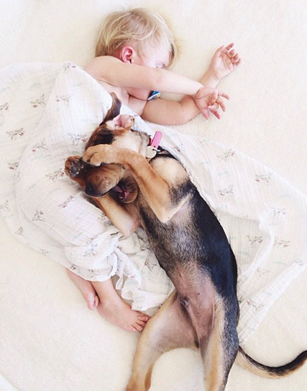 toddler-naps-with-puppy-theo-and-beau-2-14.jpg