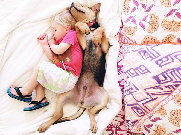toddler-naps-with-puppy-theo-and-beau-2-16