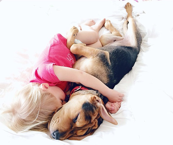 toddler-naps-with-puppy-theo-and-beau-2-2.jpg