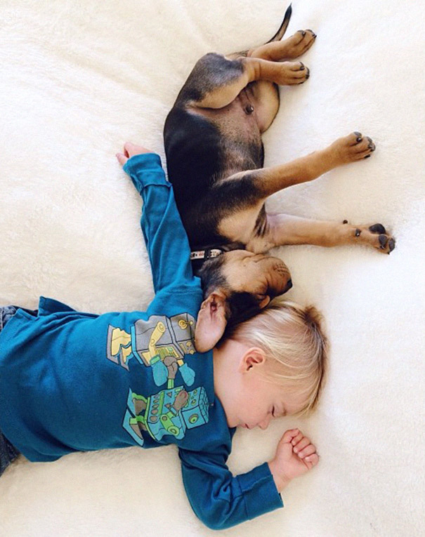 toddler-naps-with-puppy-theo-and-beau-2-6.jpg