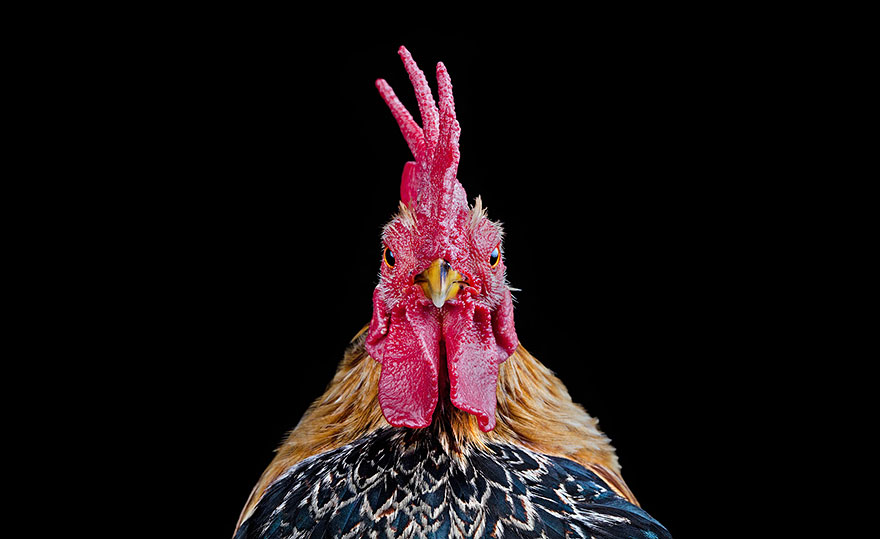 ayam-seramas-chicken-photography-ernest-goh-1