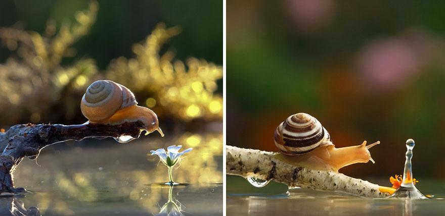 macro-photography-vyacheslav-mishchenko-64