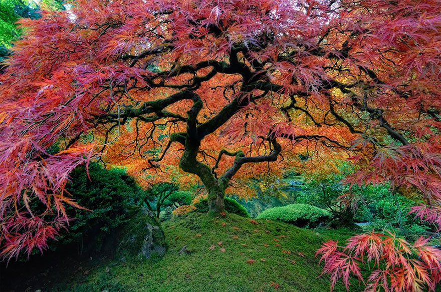 amazing-trees-21