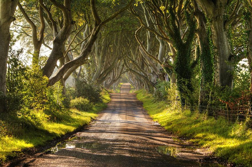 amazing-trees-6-2