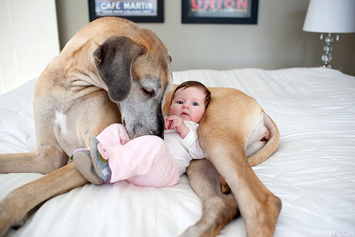 cute-big-dogs-and-babies-31