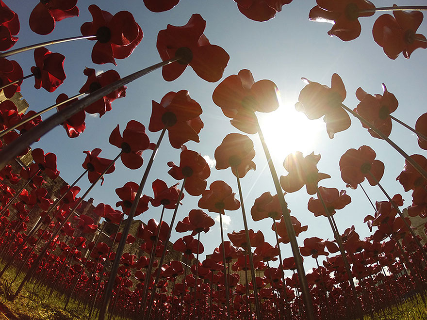 ceramic-poppies-first-world-war-installation-london-tower-10