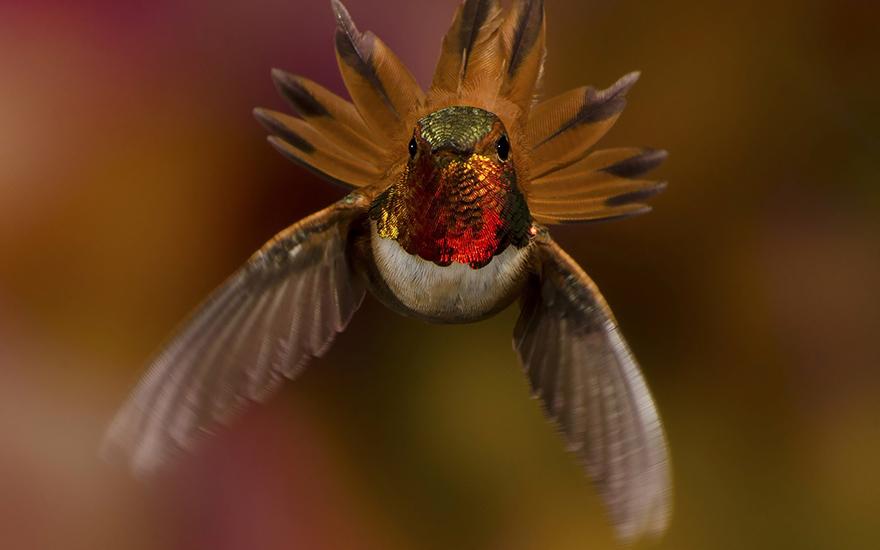cute-beautiful-hummingbird-photography-19