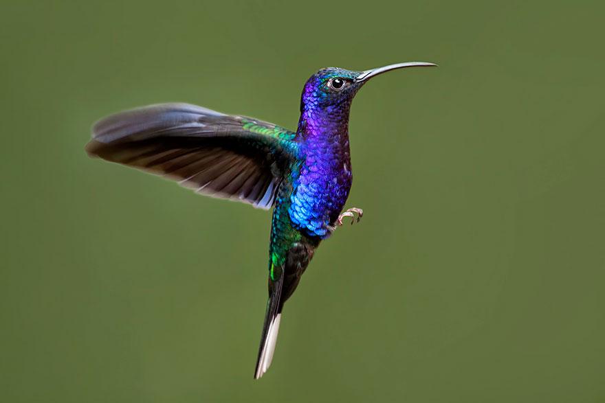 cute-beautiful-hummingbird-photography-9