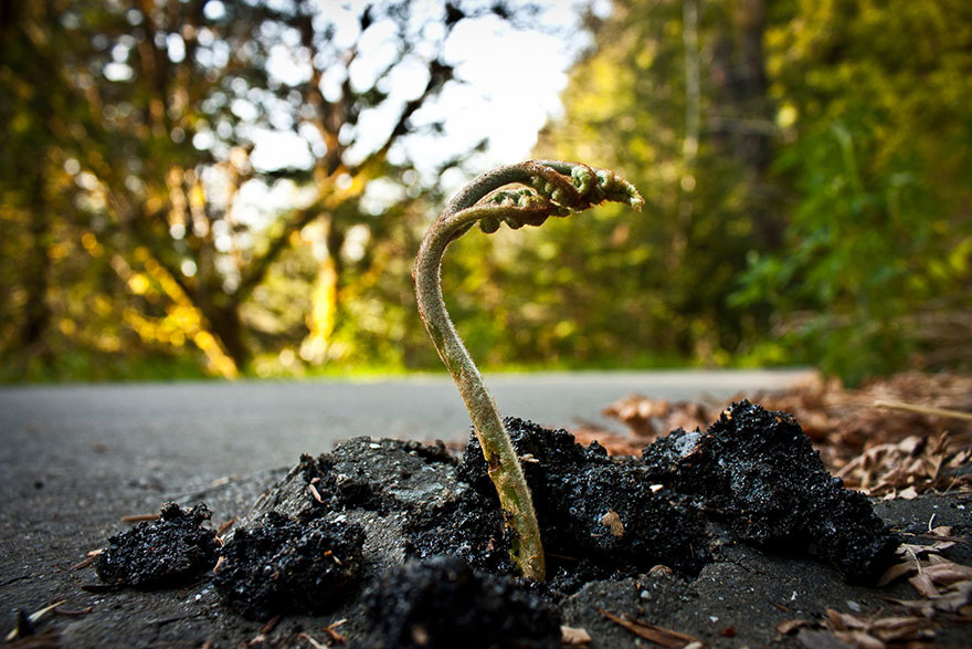 flower-tree-growing-concrete-pavement-16
