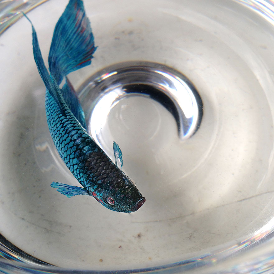 realistic-3d-sea-animals-resin-keng-lye-2