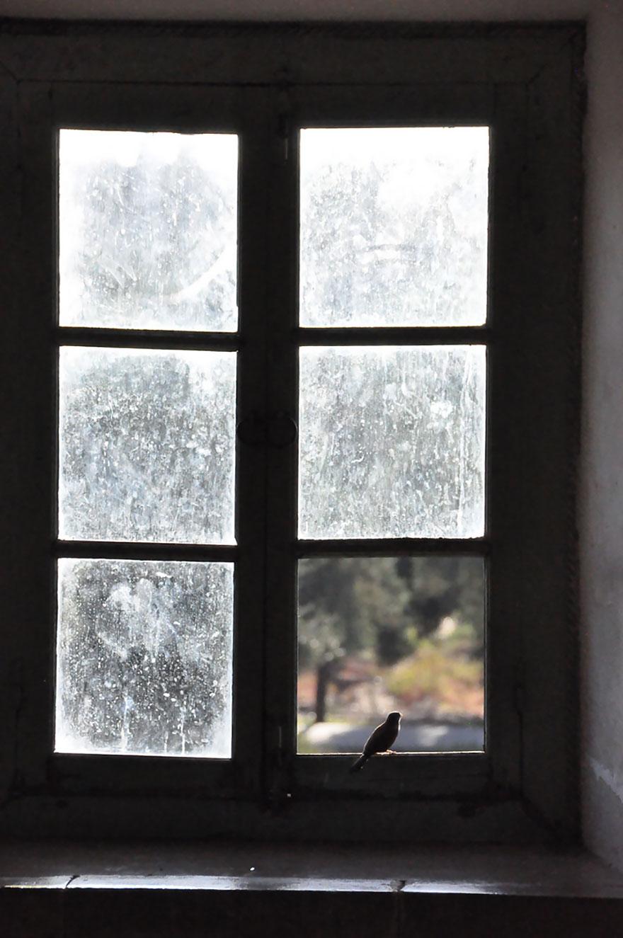 animals-looking-through-the-window-9