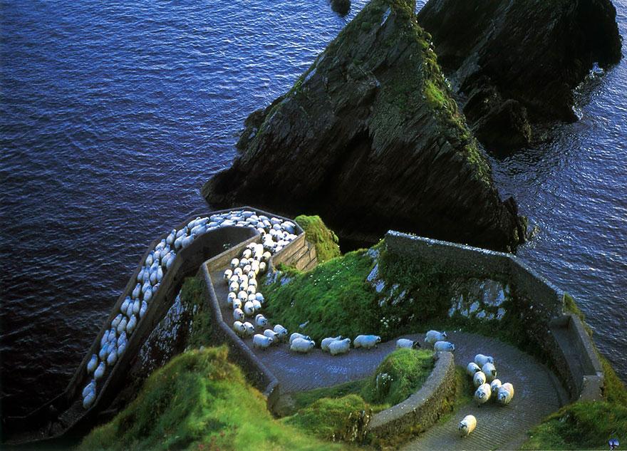 sheep-herds-around-the-world-1